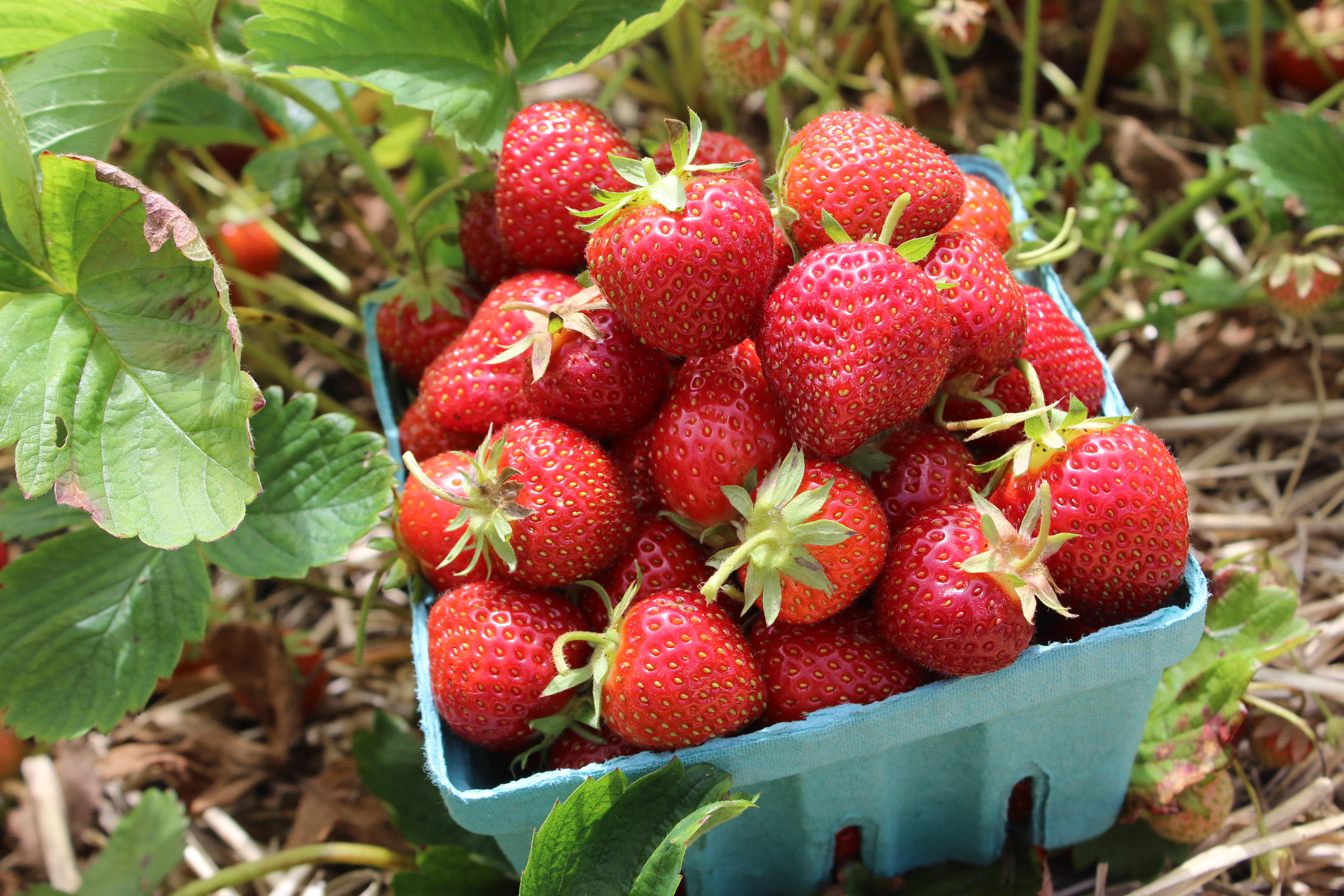9.Strawberries