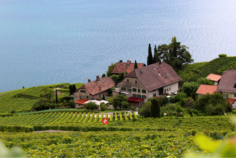 vineyard7