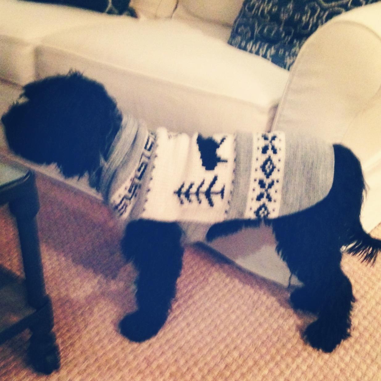 Ivyinasweater